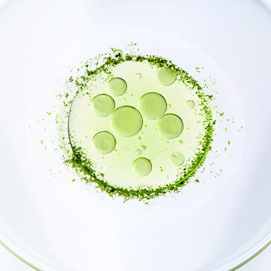 Microalgae